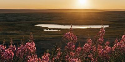 Равнина на закате
