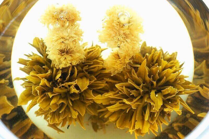Чайный цветок крупный вид