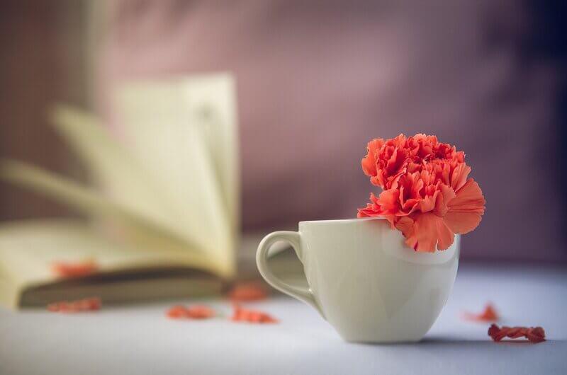 Книга белая чашка красный цветок