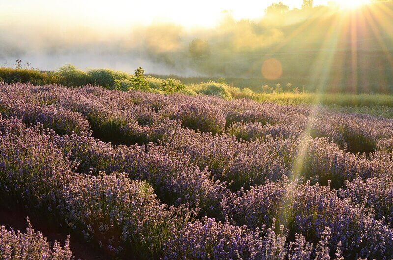 Цветочное поле солнечный свет