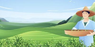 Горы небо чайная плантация