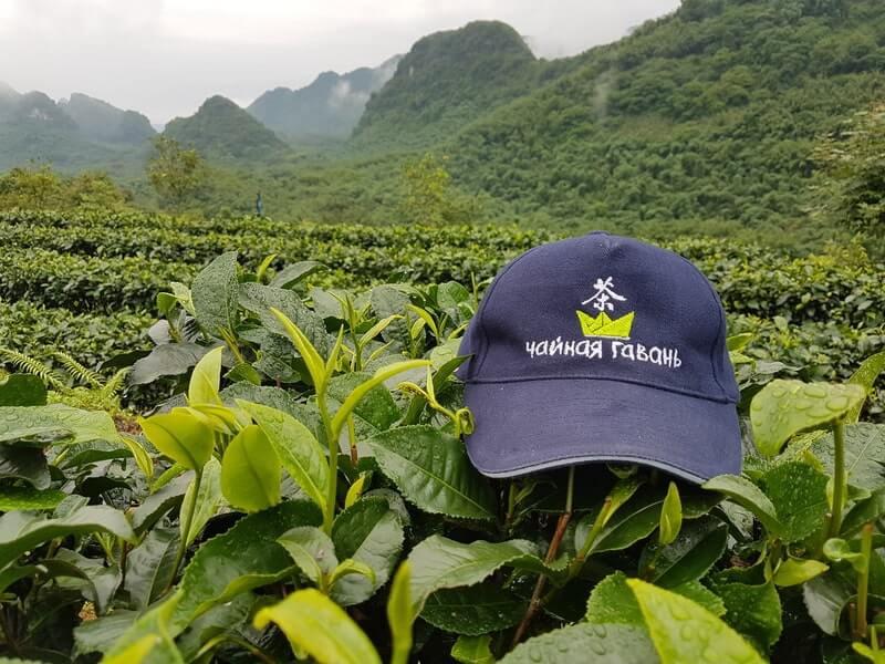 Чайная плантация кепка