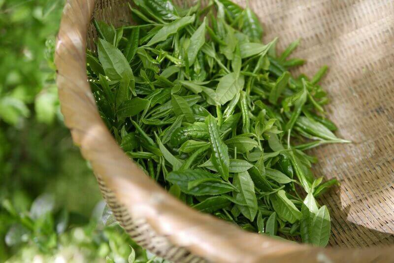 Корзина зеленые листья