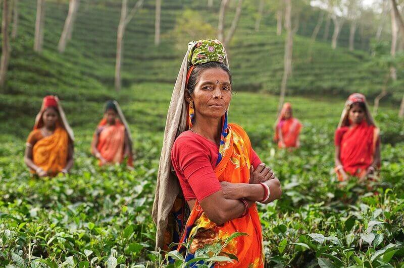 Индия чайная плантация