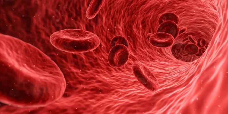 Эритроциты крови