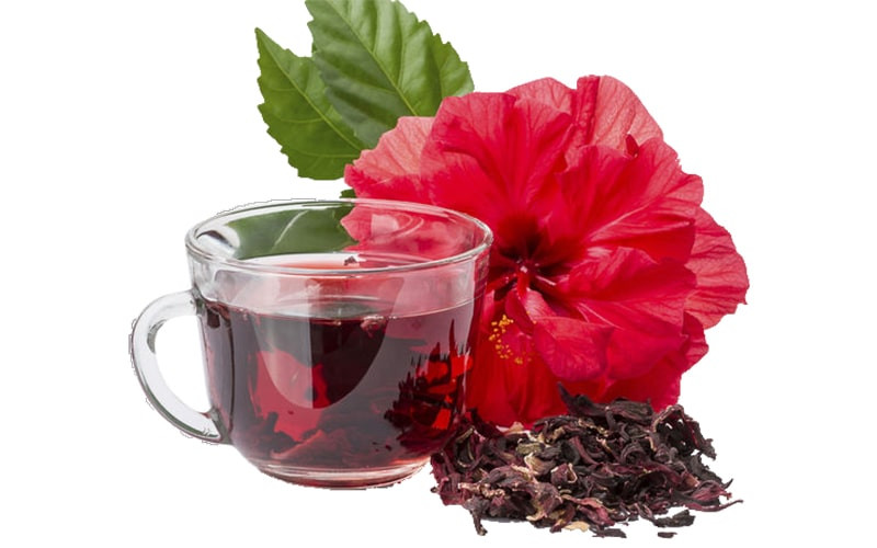 Напиток цветок заварка каркаде