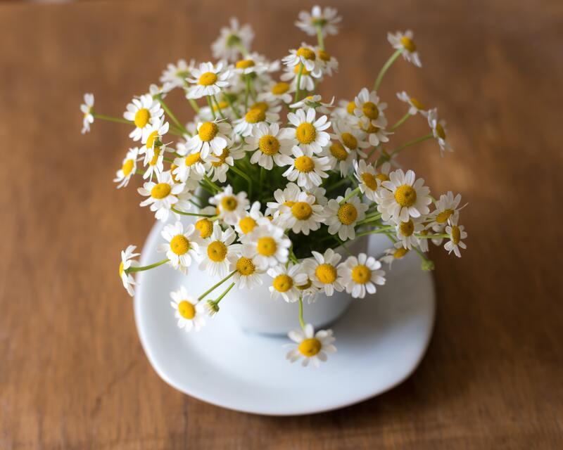 Цветы ромашки в чашке